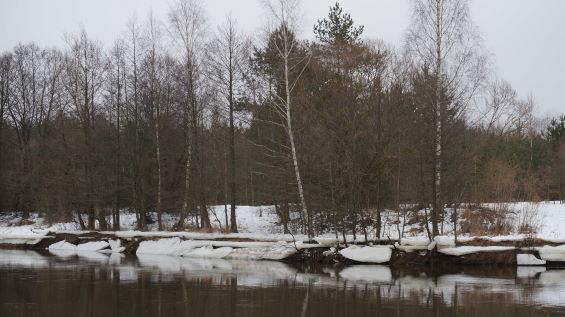 Побывал в прошедшие выходные на любимой реке. В ... | Отчеты о рыбалке в Беларуси