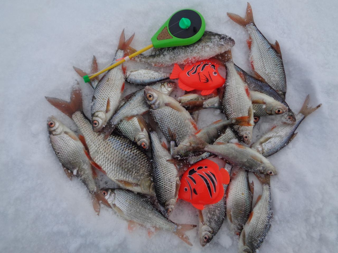 Сегодня рыбачил с 10-00 до 16-45 в районе ... | Отчеты о рыбалке в Беларуси