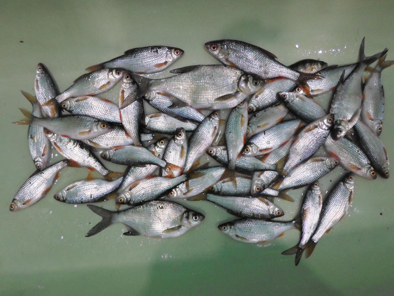 Вчера 14.02.17. Были с Рыба4оком.Сразу приехали на свое ... | Отчеты о рыбалке в Беларуси