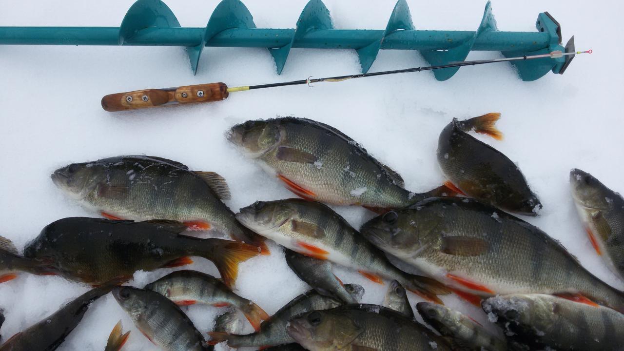 Вчера....погода дрянь.. Дорога на Ходорово такая же. Пошёл ... | Отчеты о рыбалке в Беларуси