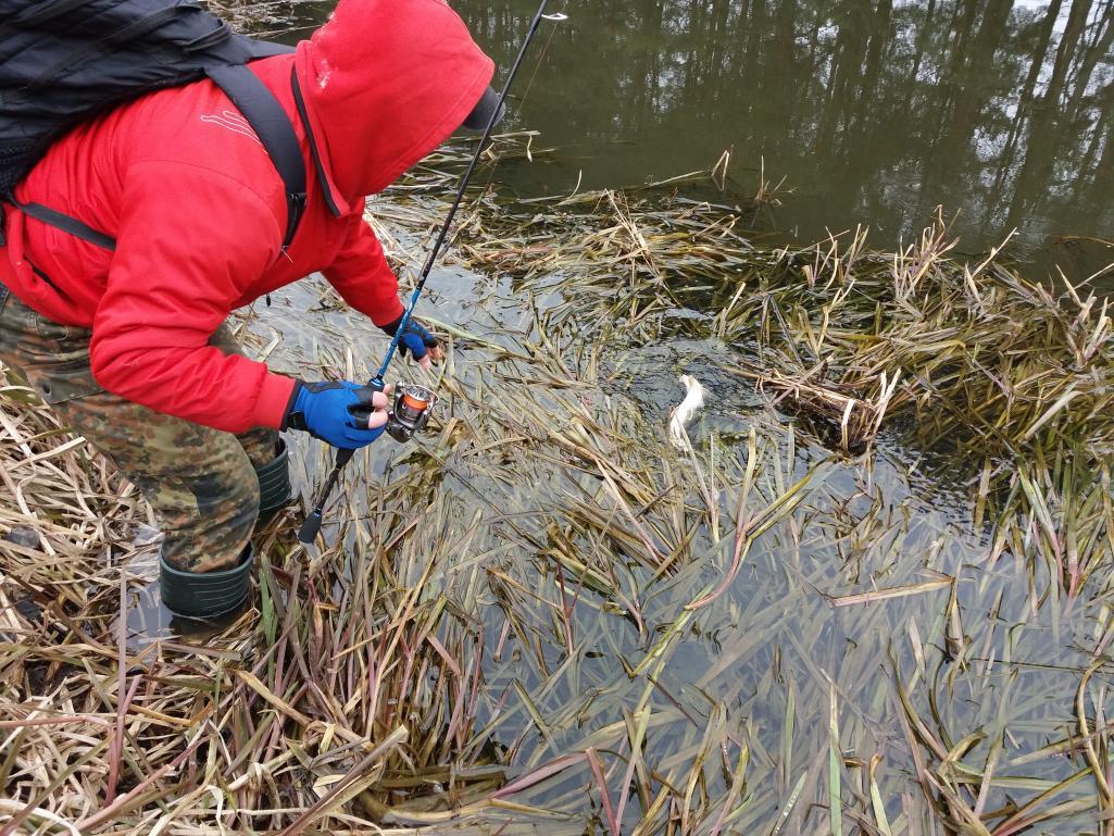 Очередная вчерашняя вылозка на обводной канал с Блюбёрдом ... | Отчеты о рыбалке в Беларуси