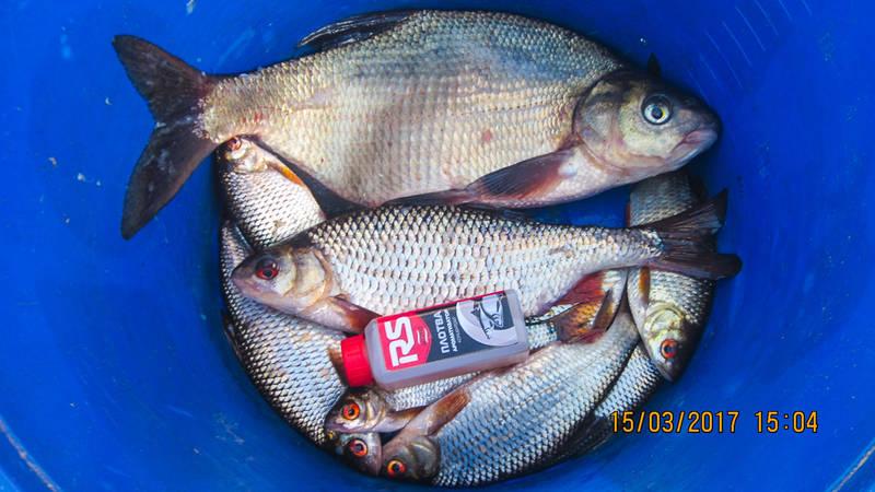 Выбрался сегодня открывать сезон на одну из заток Немана ... | Отчеты о рыбалке в Беларуси
