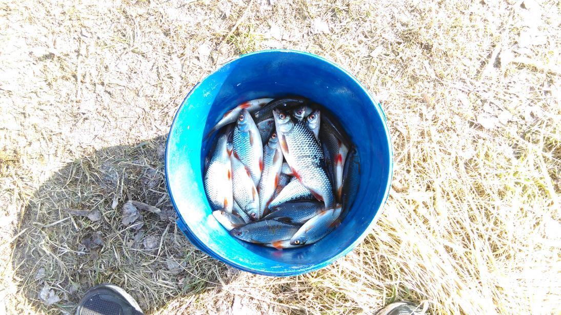 Выходные также посетили белоозерск , но в толпу ... | Отчеты о рыбалке в Беларуси