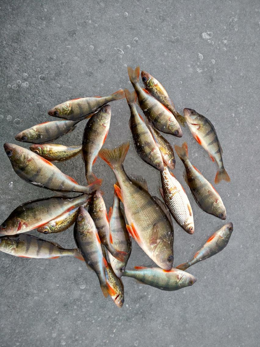 Закрытие состоялось, не фонтан, конечно, но брызги есть ... | Отчеты о рыбалке в Беларуси