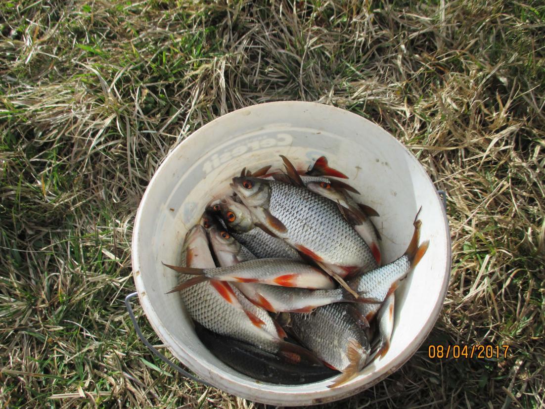Берг, Народная пословица права, но вот в чём ...   Отчеты о рыбалке в Беларуси