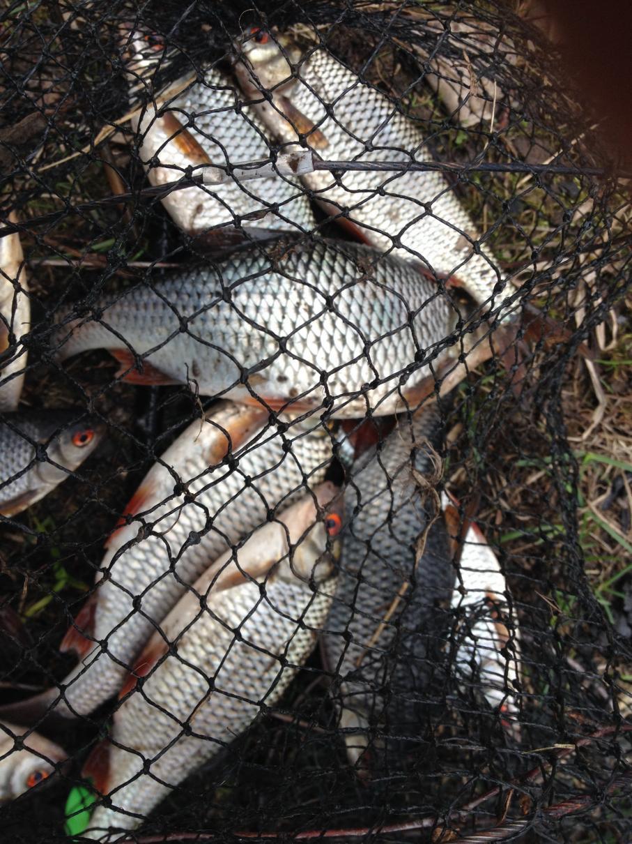 Сегодня в обед выскочил на секретные водоемы  ... | Отчеты о рыбалке в Беларуси