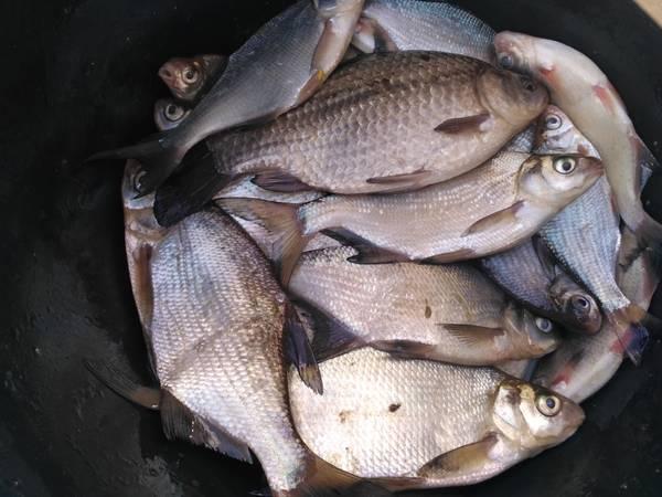 В понедельник , подловив хоть какое-то подобие сносной ... | Отчеты о рыбалке в Беларуси