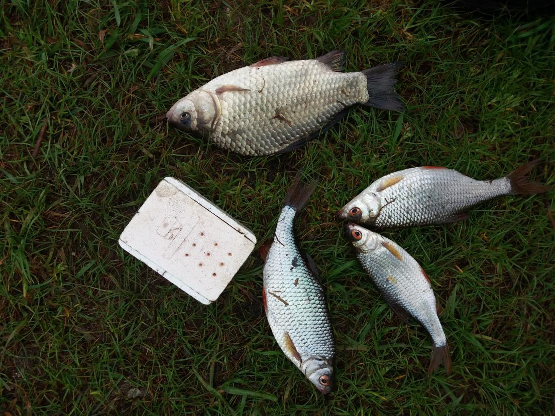 Доброго всем времени суток)и вот долгожданные теплые деньки ... | Отчеты о рыбалке в Беларуси