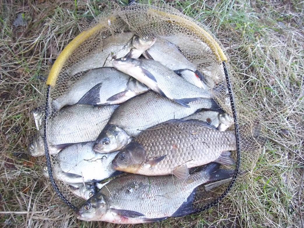 Очередная рыбалка в районе Вязыни . Рыбалка не ... | Отчеты о рыбалке в Беларуси