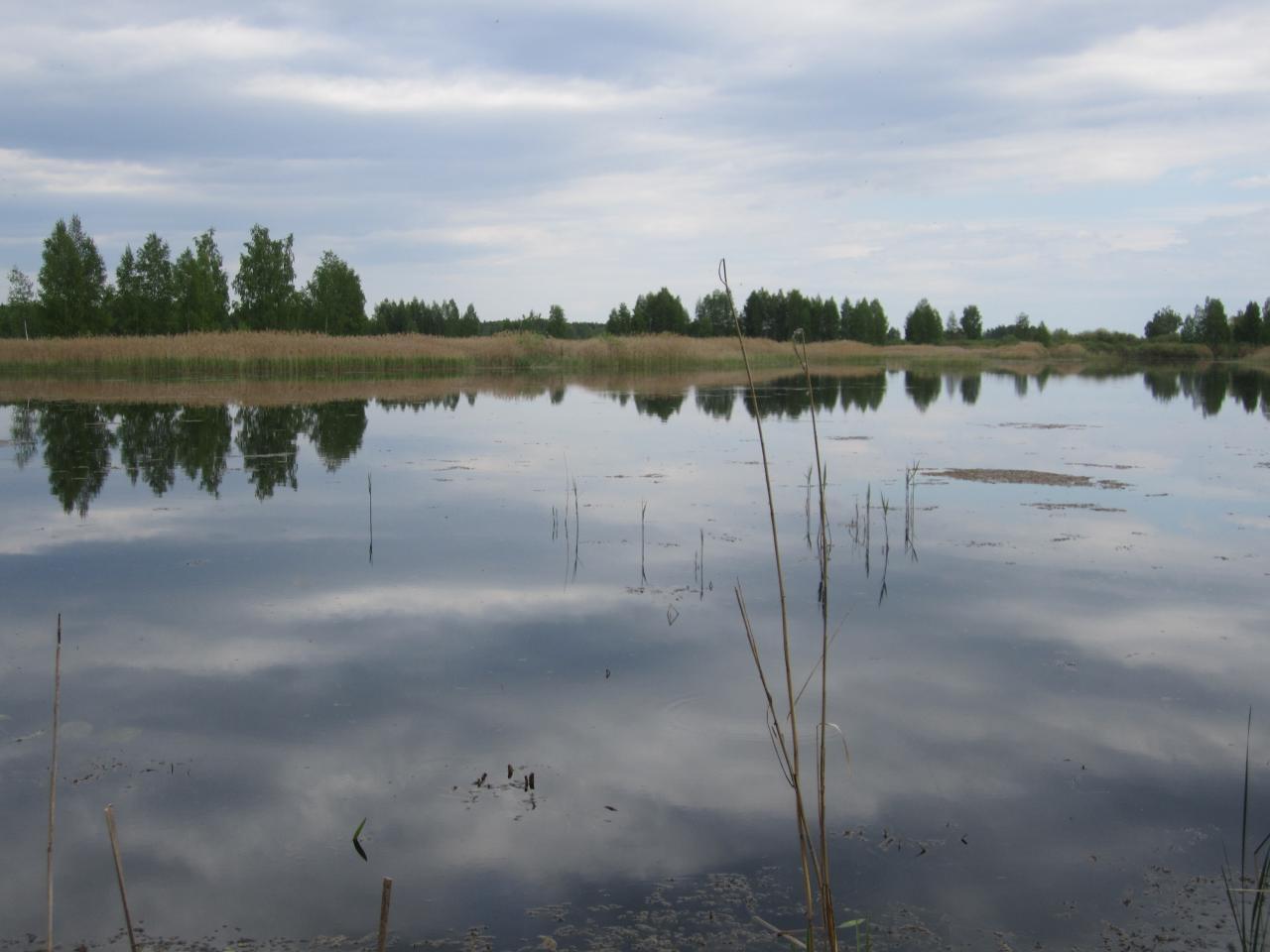 Разливы, вторая попытка половить линя, активность пока не ... | Отчеты о рыбалке в Беларуси