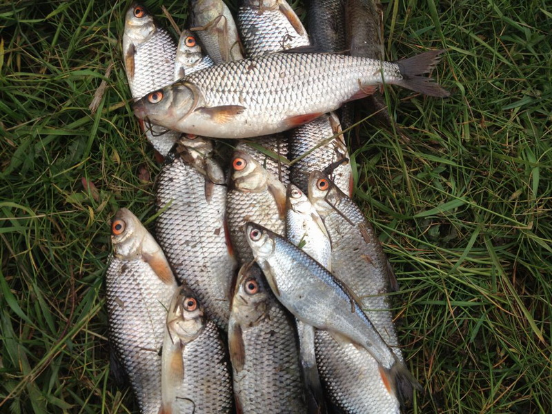 Сегодня с утра три раза переводил будильник, все таки три дня, в 4 утра вставать на рыбалку ...   Отчеты о рыбалке в Беларуси