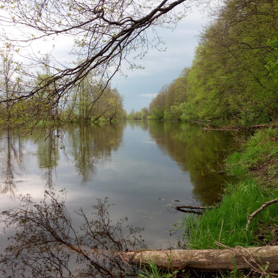 В День Победы, посетил Друть со спиннингом... | Отчеты о рыбалке в Беларуси