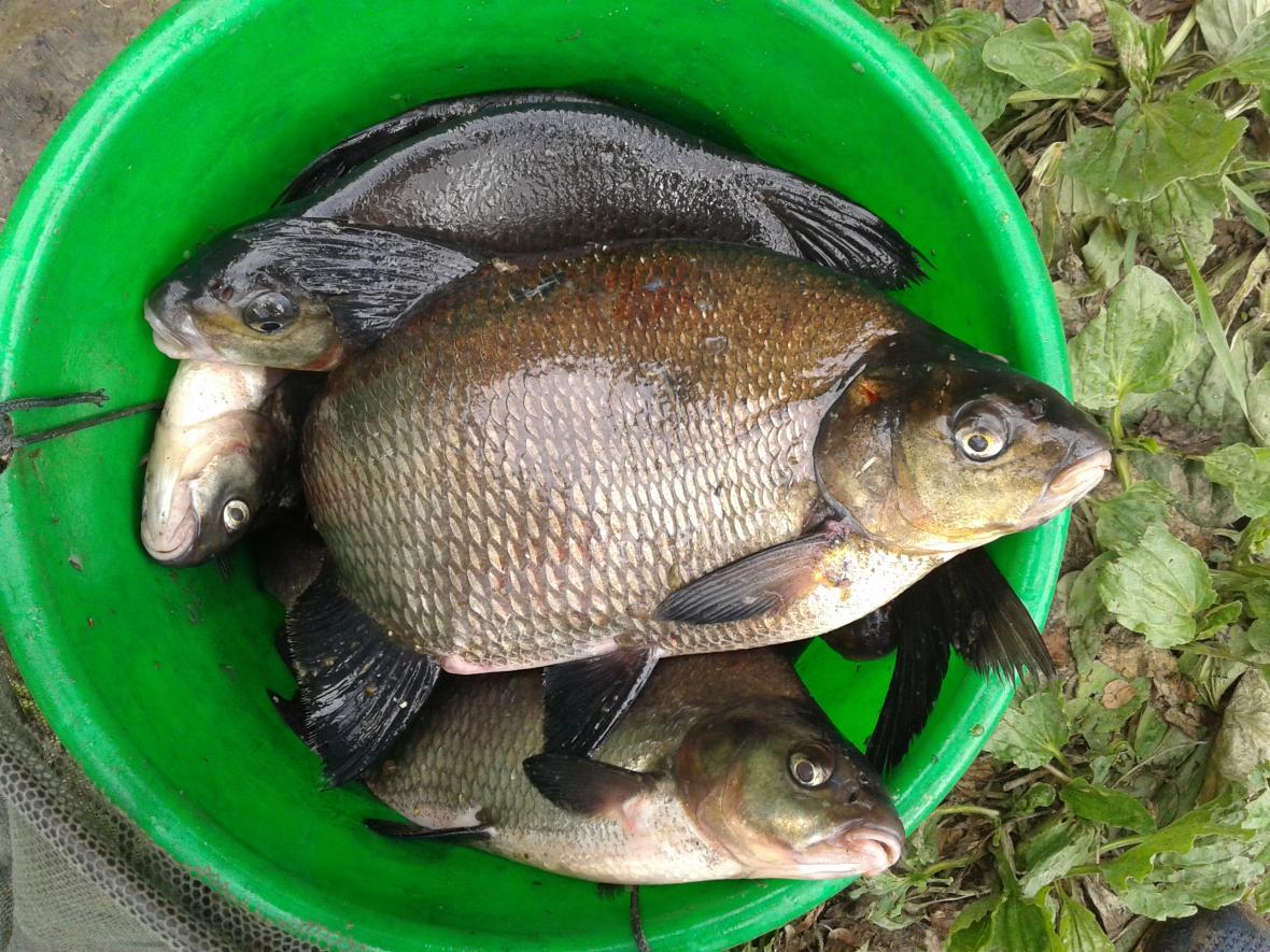 Был на реке 3 раза в теченииНедели. Два ... | Отчеты о рыбалке в Беларуси