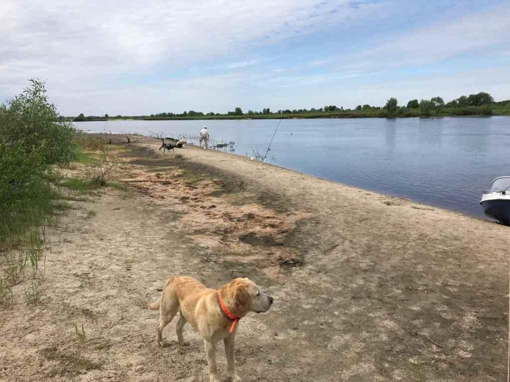Были 07-10 июня, район Повчина. Клевало всего по понемногу ... | Отчеты о рыбалке в Беларуси