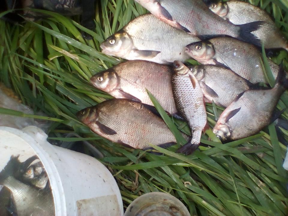 Добрый вечер!!! Вновь выбрался на рыбалку. Сегодня решил ...   Отчеты о рыбалке в Беларуси