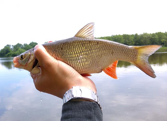 Выходные наконец-таки удалось попасть на неман . В ... | Отчеты о рыбалке в Беларуси