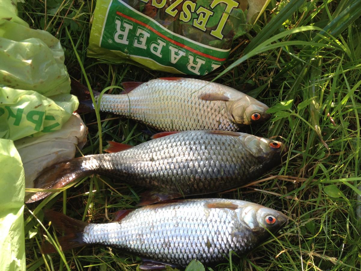 После очень успешной рыбалки в воскресенье,дома было не ... | Отчеты о рыбалке в Беларуси