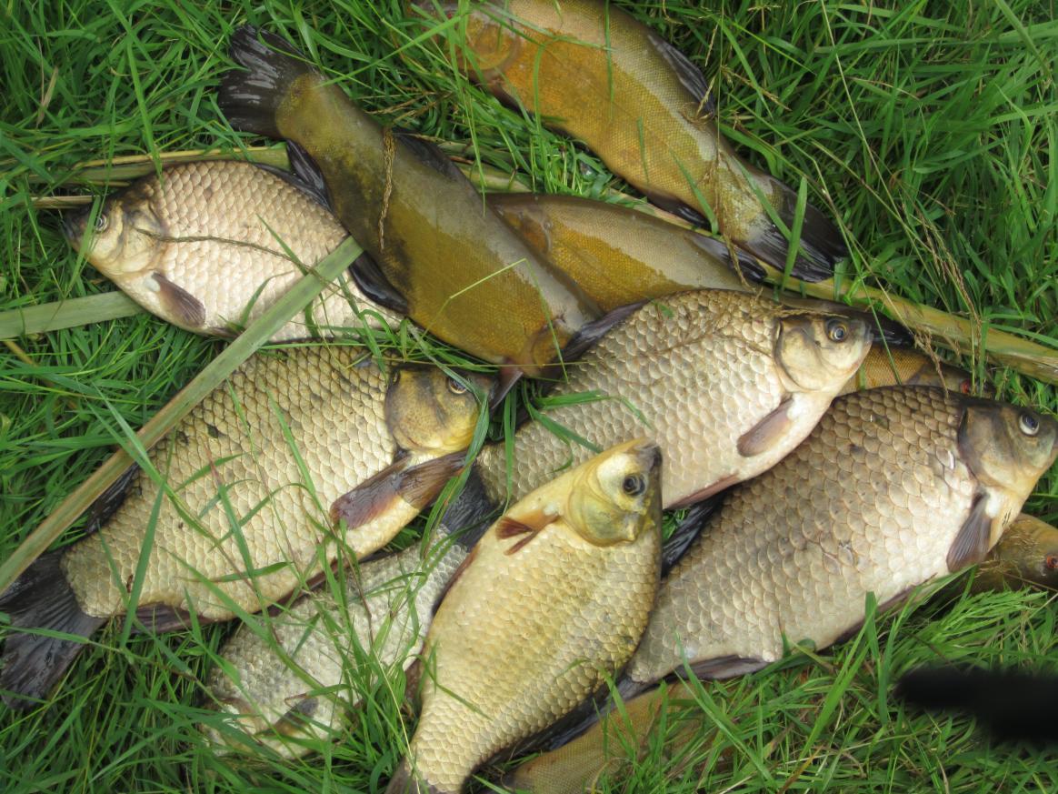 Позднее утро, активность клёва с 06.00 по 0830 ... | Отчеты о рыбалке в Беларуси