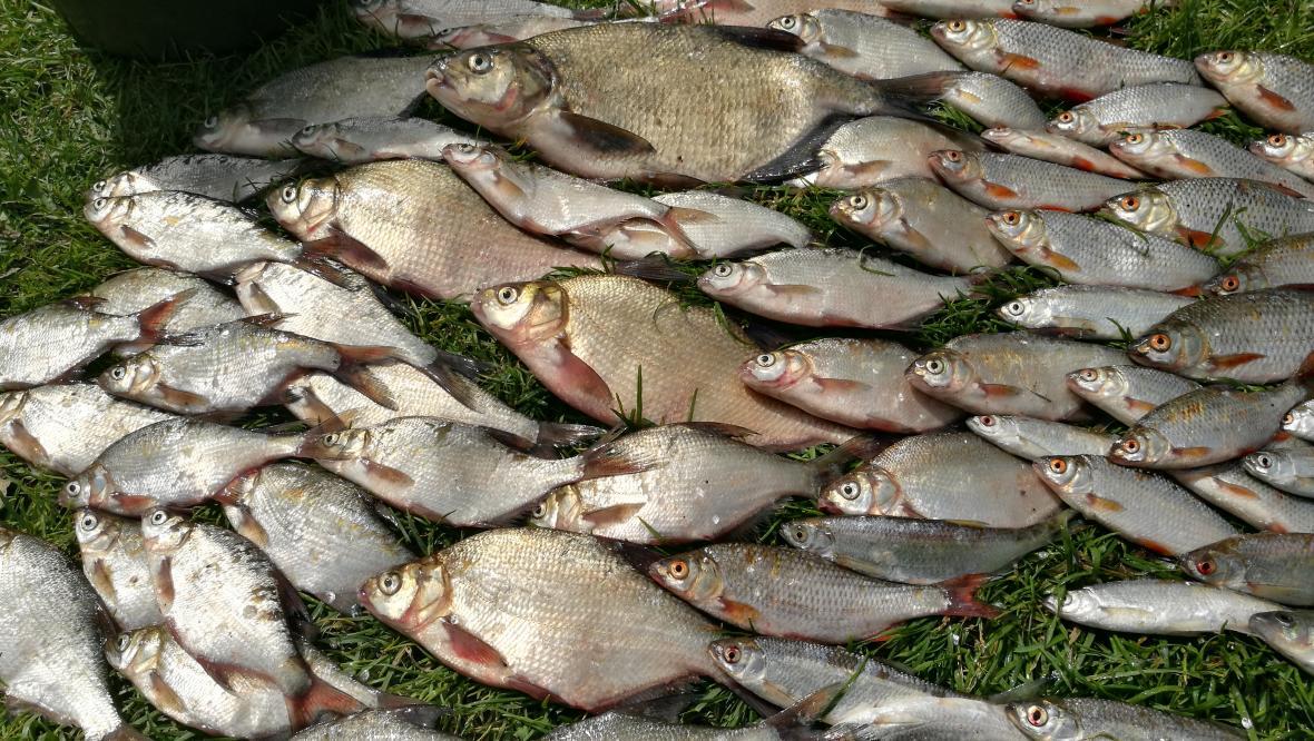 Суббота. Утро. Ловили в районе островов на мах ... | Отчеты о рыбалке в Беларуси