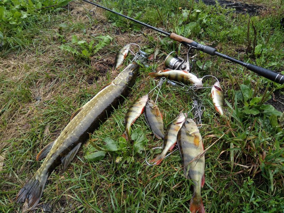 Вчера и сегодня тоже гонял со спиннингом. Крупная ...   Отчеты о рыбалке в Беларуси