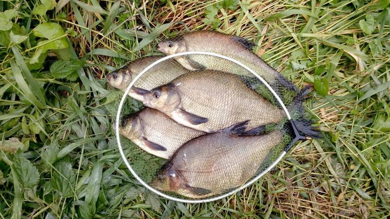Вот и я дорвался до долгожданной рыбалки ... | Отчеты о рыбалке в Беларуси
