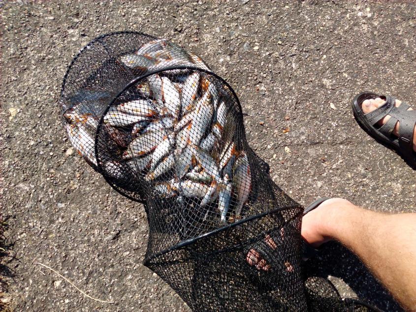 Всем привет !! Был сегодня на Волчковичах на ... | Отчеты о рыбалке в Беларуси