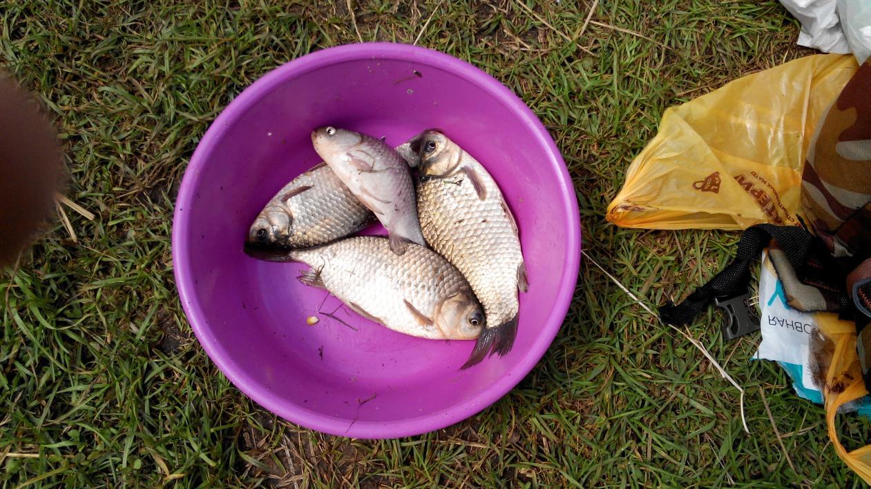 Запоздалый отчёт за 19 июля.Поехали с братом на ...   Отчеты о рыбалке в Беларуси