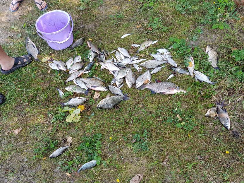 Был с субботы на воскресенье. В районе б/о ... | Отчеты о рыбалке в Беларуси
