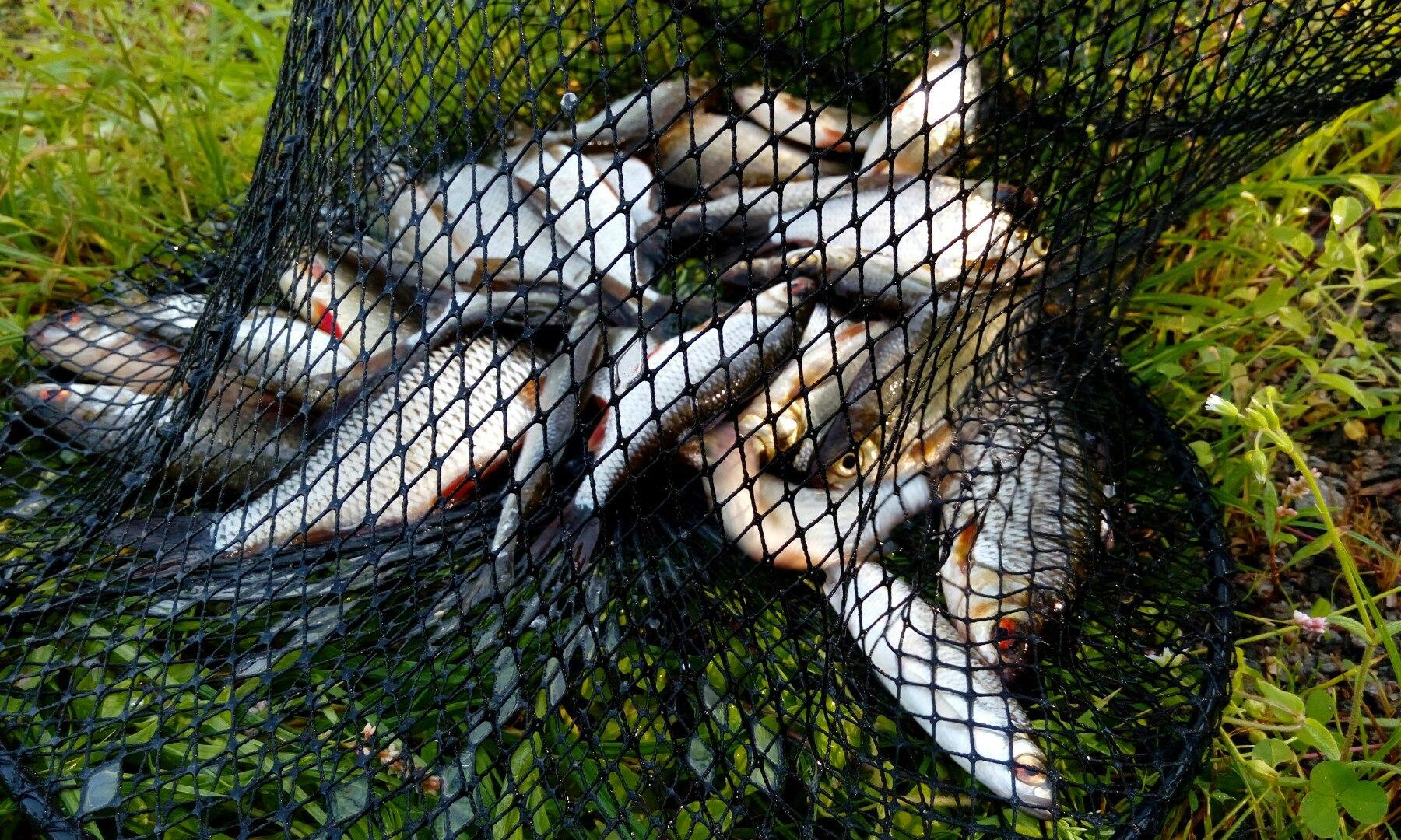 Как же я соскучился по рыбалке, по рыбалке ...   Отчеты о рыбалке в Беларуси