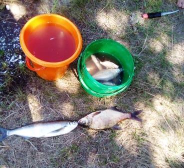 Очень коротко и по существу.Воскресенье. Днепр, все там ... | Отчеты о рыбалке в Беларуси