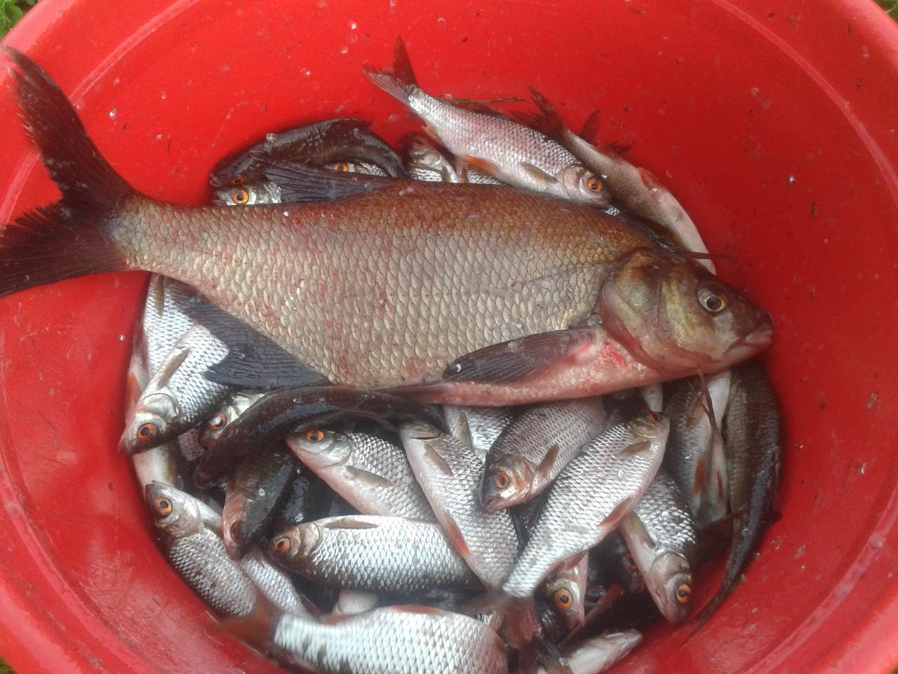 Побывали яна любимом водоёмчике. Рано приехать не получилось ...   Отчеты о рыбалке в Беларуси