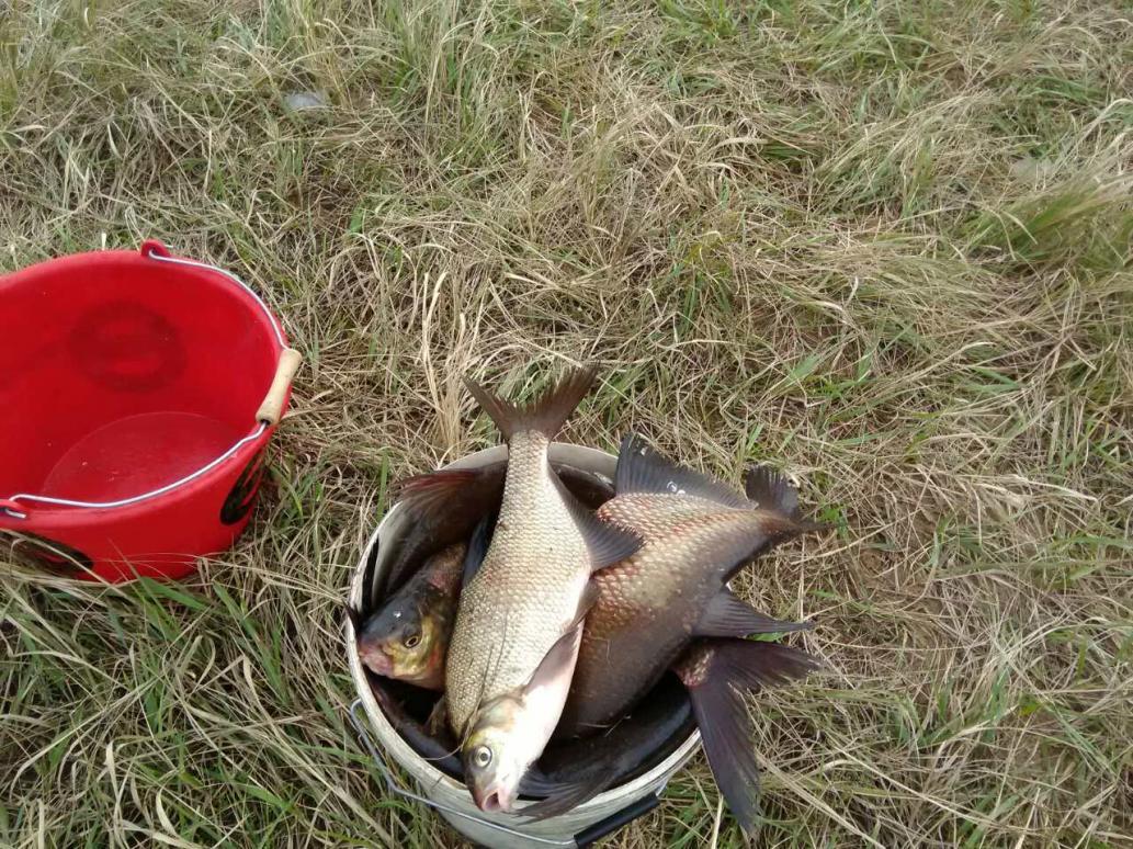 Посетил реку.Фидер.Неплохо поклевывало,даже перестал рыбалить через 6 часов ... | Отчеты о рыбалке в Беларуси