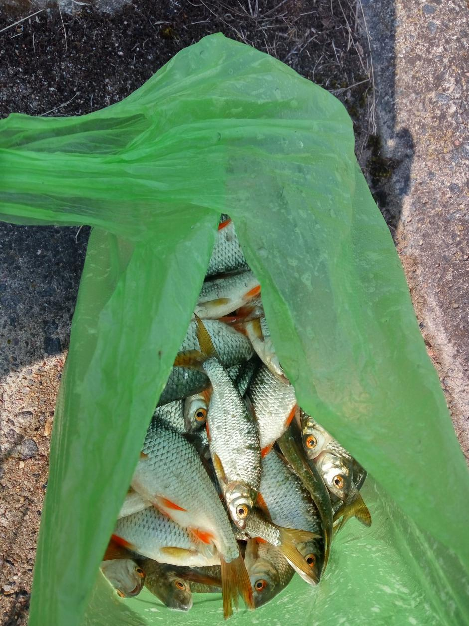 Снова пишу я)Был в воскресенье с 6-ти утра ... | Отчеты о рыбалке в Беларуси