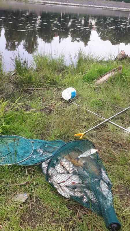 В прошлом году, я впервые в жизни, летом, не смог приехать в Пинск ...   Отчеты о рыбалке в Беларуси