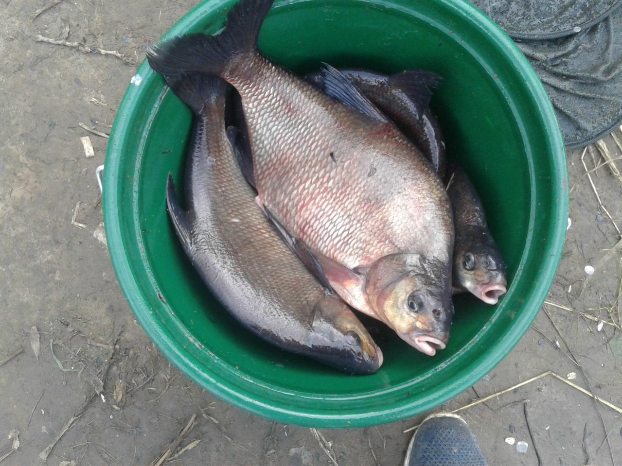 два дня назад был на реке. погодка не ... | Отчеты о рыбалке в Беларуси