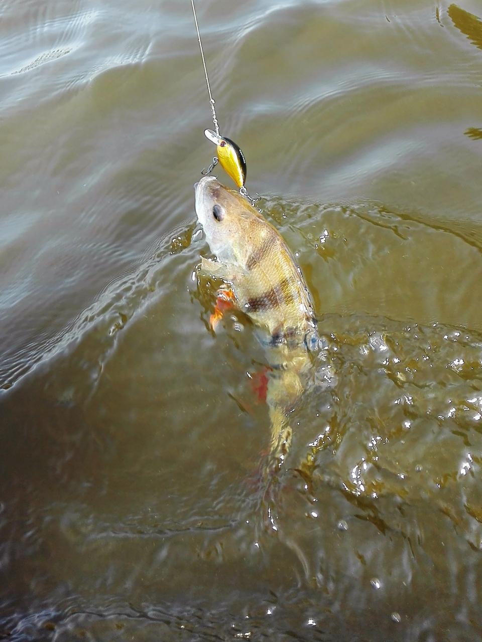 И снова Днепр и снова ловля былых сплавом...В ... | Отчеты о рыбалке в Беларуси