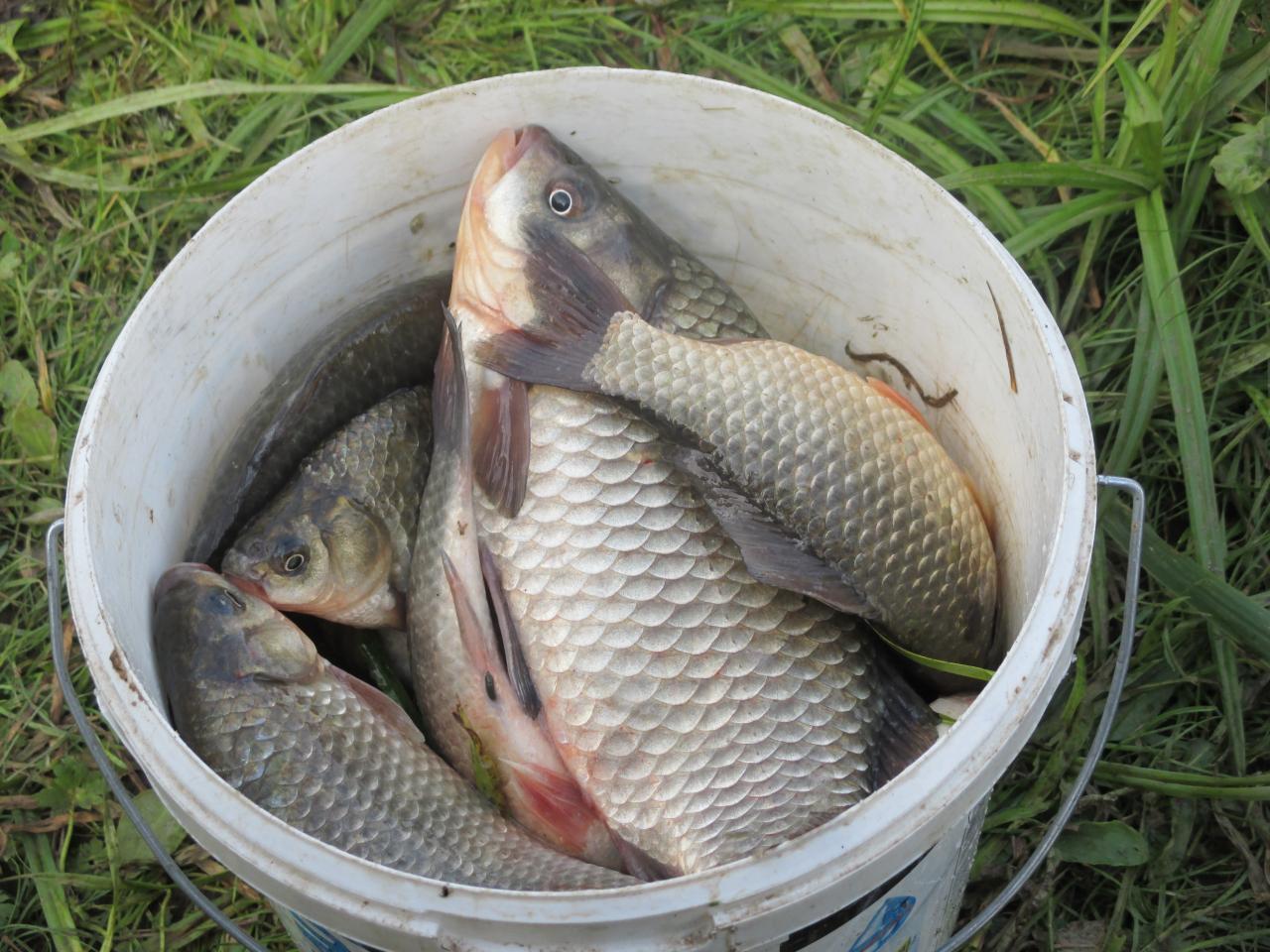 Нежданно - негаданно выпал внеплановый выходной на пятницу ... | Отчеты о рыбалке в Беларуси
