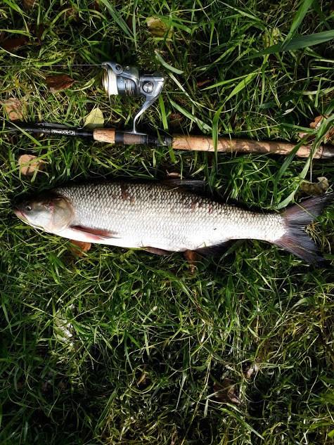 Ну а сегодня поистине трудовая рыбалка: Жерех ни ... | Отчеты о рыбалке в Беларуси