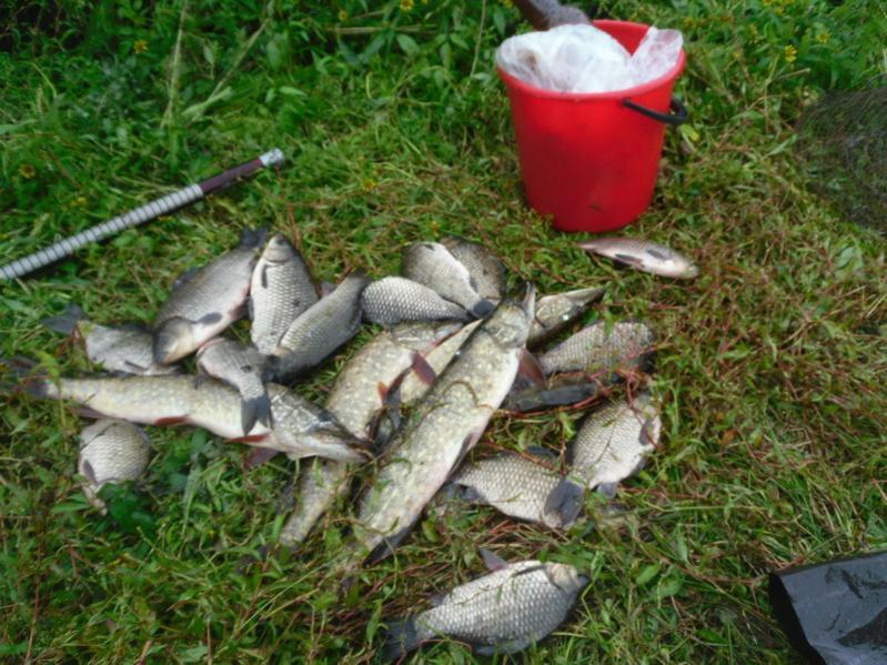 Охренеть. На СВ никто не ловит.Хотя..,речь опять же ... | Отчеты о рыбалке в Беларуси