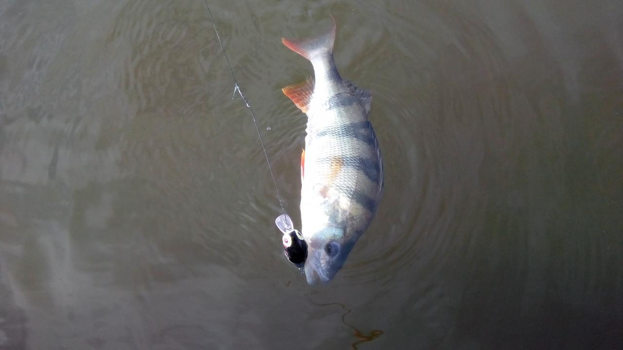 С 30 по сегодня пожили на реке с ... | Отчеты о рыбалке в Беларуси