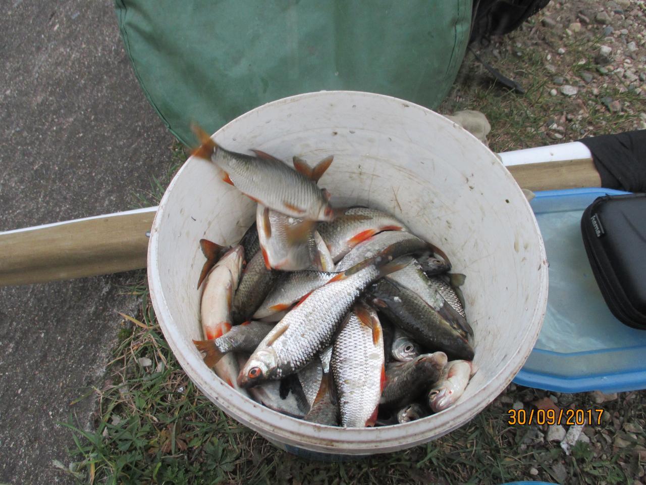 Сегодня решил посидеть на Дроздах, цель плотва. Прибыл ... | Отчеты о рыбалке в Беларуси