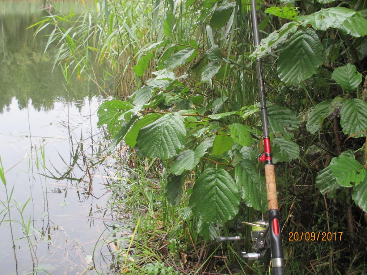 Вчера грибы, ну а сегодня решил помахать немного ... | Отчеты о рыбалке в Беларуси