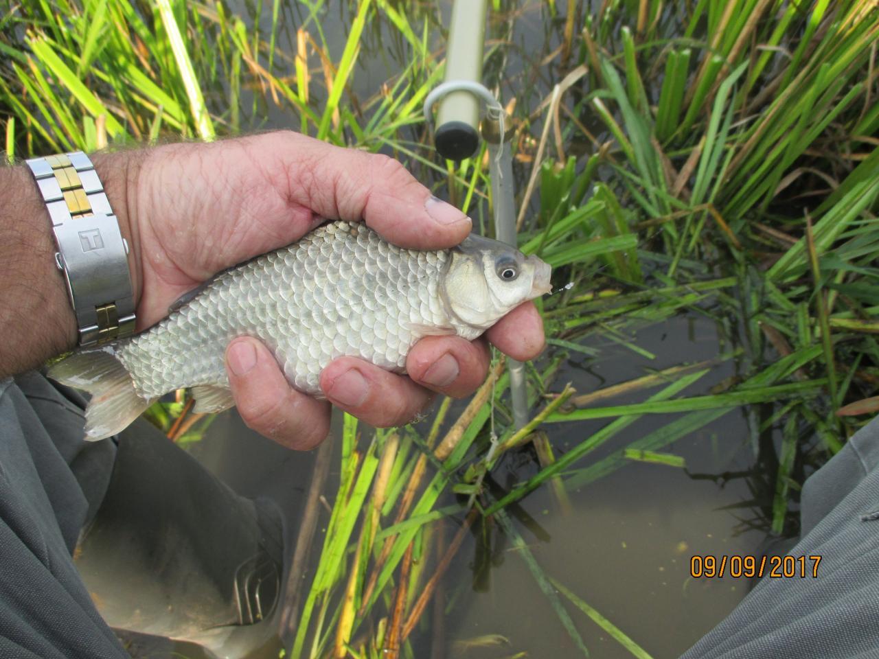 Вчера с утра грибы, затем неспешные сборы на ...   Отчеты о рыбалке в Беларуси