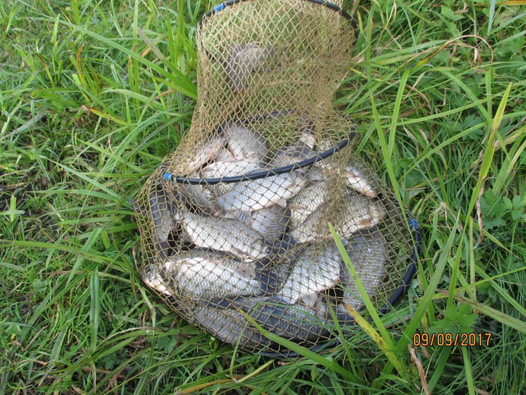 Вчера с утра грибы, затем неспешные сборы на ... | Отчеты о рыбалке в Беларуси