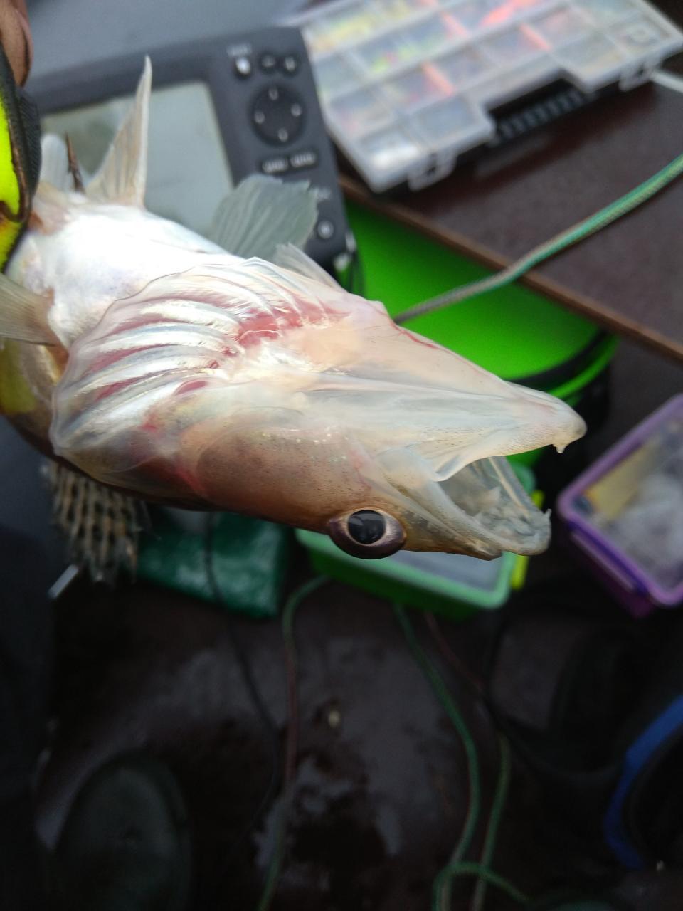 Месяц не был на полноценной рыбалке. То одно ... | Отчеты о рыбалке в Беларуси