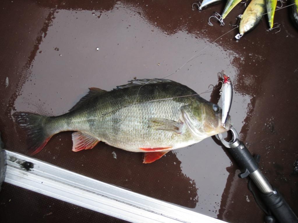 Сегодня побывал на водоёме. Цель - обрыбить новые ... | Отчеты о рыбалке в Беларуси