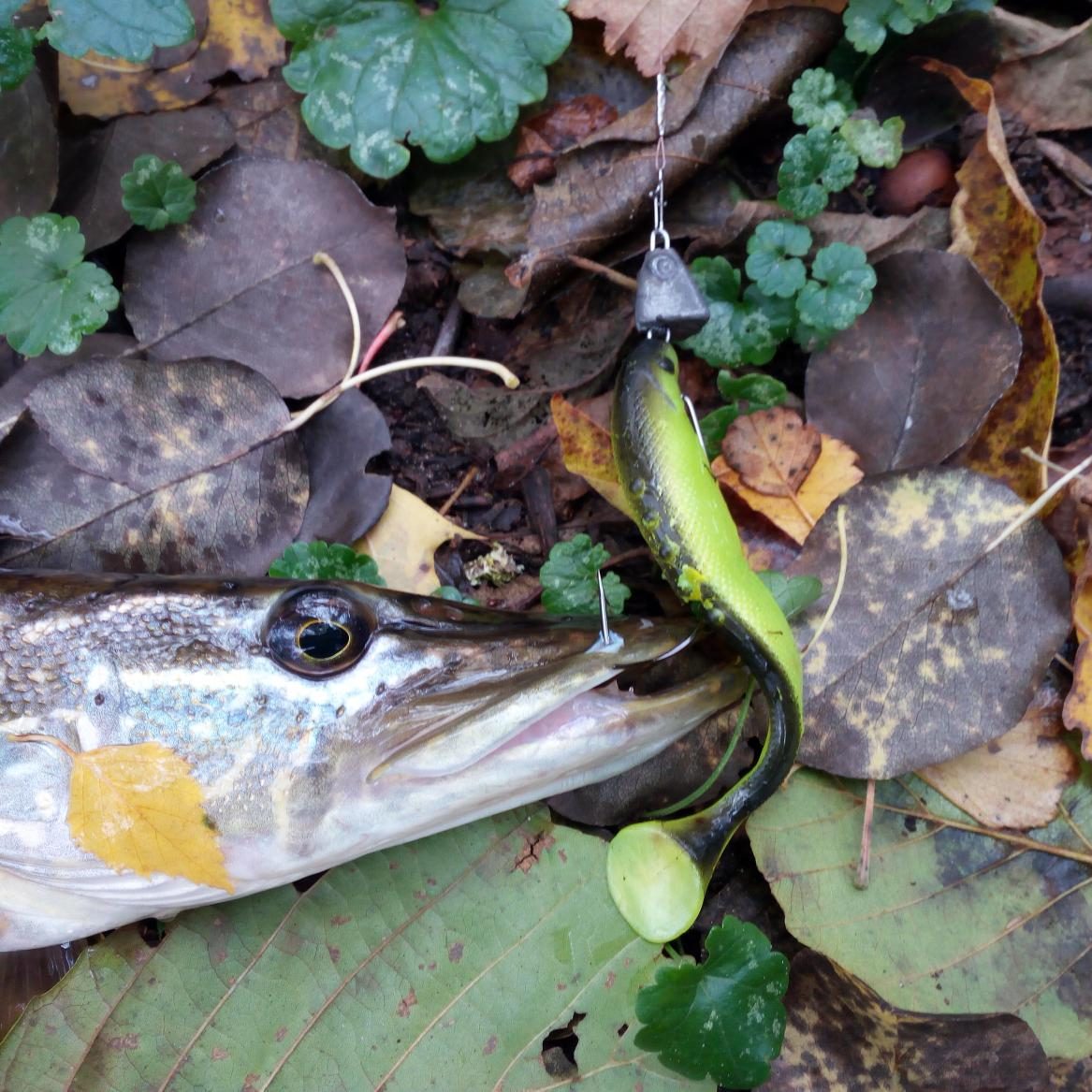 Сгонял на выходные на Гомельщину ... | Отчеты о рыбалке в Беларуси