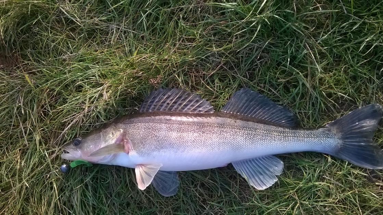 Несколько раз за прошедшую неделю выбирался побродить по ... | Отчеты о рыбалке в Беларуси