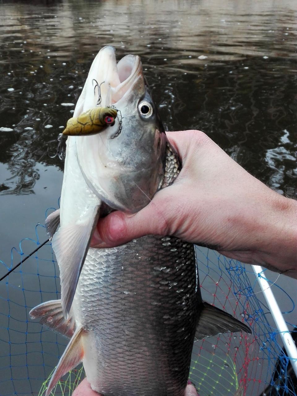 Походу мы с напарником одни на Днепре ловим ... | Отчеты о рыбалке в Беларуси