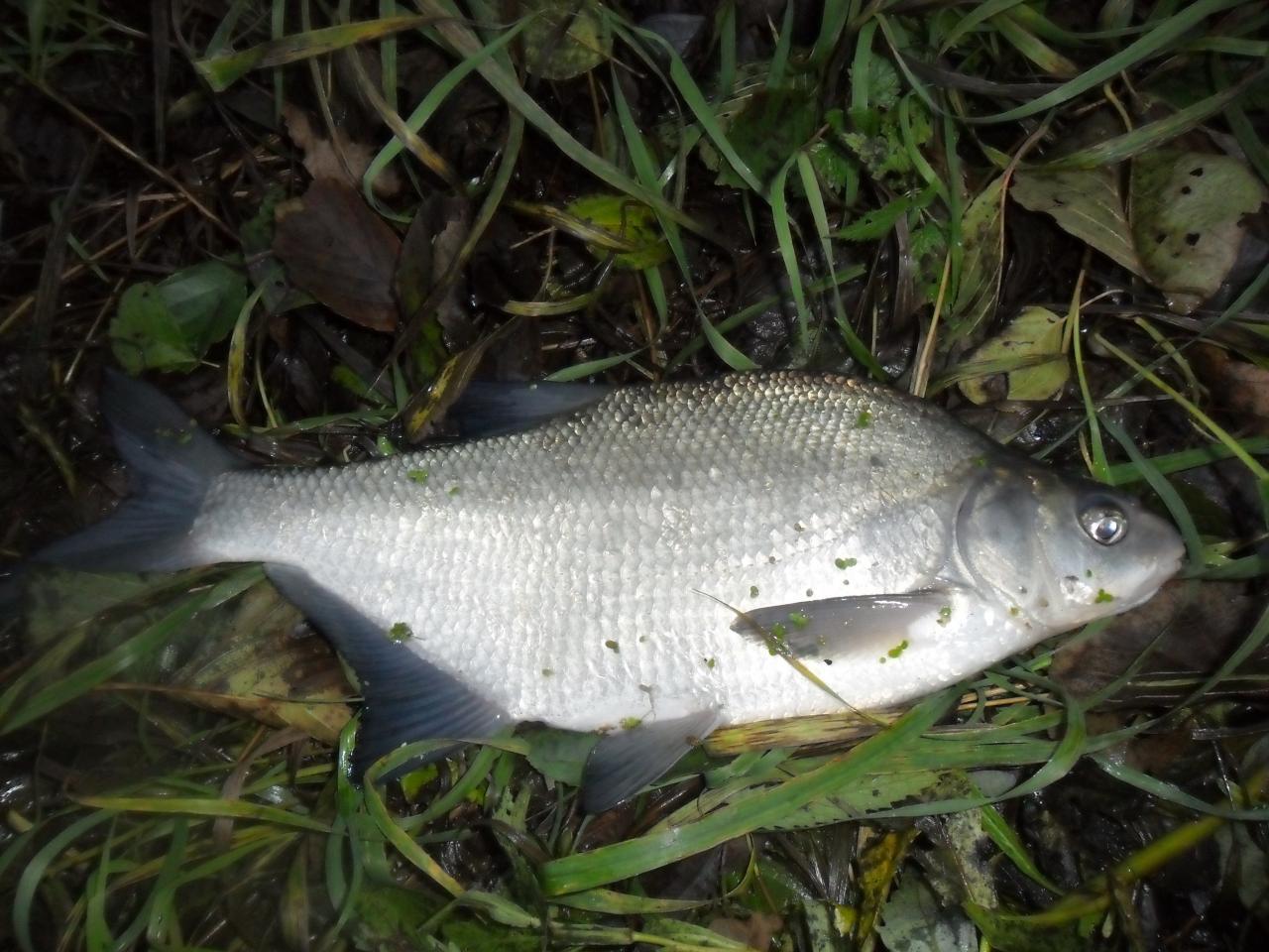 В пятницу был на реке. Щука питалась активно ... | Отчеты о рыбалке в Беларуси